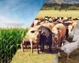 Venda de Empresa de Comércio de Produtos Agropecuários e Bricolage