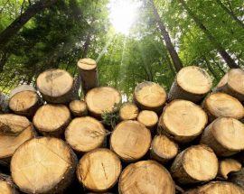 wood industry for sale